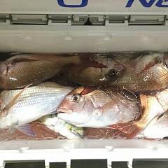 11月 29日(日) 午後・ウタセ真鯛の写真その3