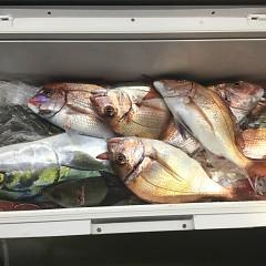 11月 29日(日) 午後・ウタセ真鯛の写真その5