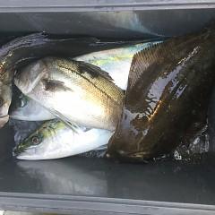 1月 3日(日) 1日便・イワシの泳がせ釣りの写真その11