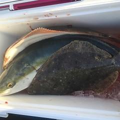 1月 3日(日) 1日便・イワシの泳がせ釣りの写真その12