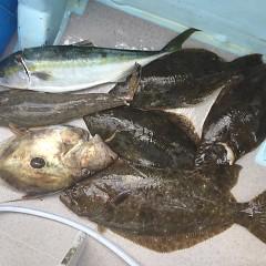 1月 7日(木) 1日便・イワシの泳がせ釣りの写真その9
