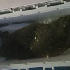 1月 9日(土) 午後・イワシの泳がせ釣りの写真その10