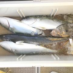 1月 11日(月) 1日便・イワシの泳がせ釣りの写真その10