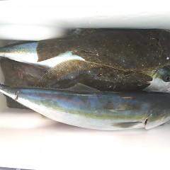 1月 11日(月) 1日便・イワシの泳がせ釣りの写真その11