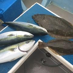 1月 12日(火) 1日便・イワシの泳がせ釣りの写真その8