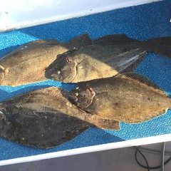 1月13日(水)イワシの泳がせ釣り1日便の写真その12