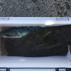 1月14日(木)イワシの泳がせ釣り1日便の写真その7