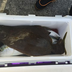 1月15日(金)イワシの泳がせ釣り1日便の写真その7