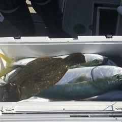 1月 25日(月) 午前便・イワシの泳がせ釣りの写真その11