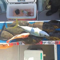 1月 31日(日) 1日便・イワシの泳がせ釣りの写真その5