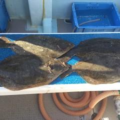 1月 31日(日) 1日便・イワシの泳がせ釣りの写真その8