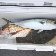 2月 11日(金) 1日便・イワシの泳がせ釣りの写真その12