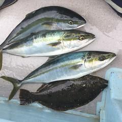2月 13日(土)午前便・イワシの泳がせ釣りの写真その10