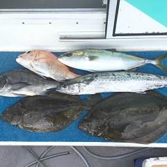 2月 14日(日)1日便・イワシの泳がせ釣りの写真その5
