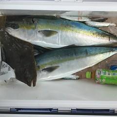 2月 14日(日)1日便・イワシの泳がせ釣りの写真その11