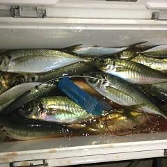 2月 20日(土)午前・泳がせ釣り 午後・アジ釣りの写真その12