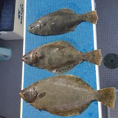 2月 21日(日)午前便・イワシの泳がせ釣りの写真その5