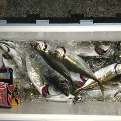 2月 26日(金)午前・泳がせ釣り 午後・アジ釣りの写真その8