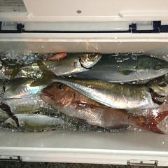 2月 26日(金)午前・泳がせ釣り 午後・アジ釣りの写真その9