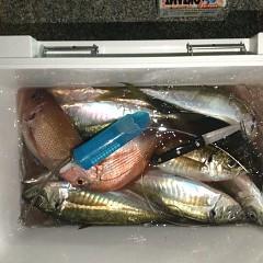 2月 26日(金)午前・泳がせ釣り 午後・アジ釣りの写真その10