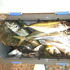 2月 28日(日)午前、午後・アジ釣りの写真その9