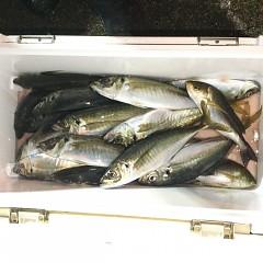2月 28日(日)午前、午後・アジ釣りの写真その11