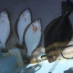 3月 18日(木)午前・ヒラメ釣り 午後・アジ釣りの写真その4
