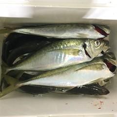 3月 18日(木)午前・ヒラメ釣り 午後・アジ釣りの写真その10