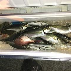 3月 18日(木)午前・ヒラメ釣り 午後・アジ釣りの写真その11