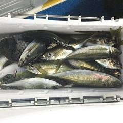 3月 31日(水)午後便・アジ釣りの写真その7