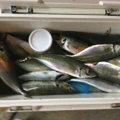 3月 31日(水)午後便・アジ釣りの写真その8