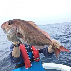 4月 24日(土) 午後便・ウタセ真鯛の写真その3