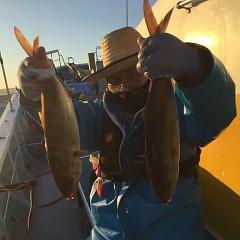4月 25日(日)午後便・ウタセ真鯛の写真その3