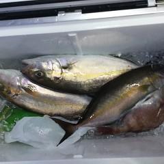 4月 25日(日)午後便・ウタセ真鯛の写真その5