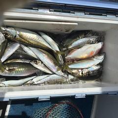 4月 27日(火) 午前、アジ釣り 午後・ウタセ真鯛の写真その6