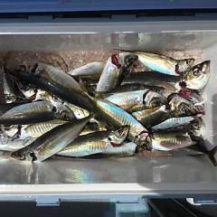 4月 27日(火) 午前、アジ釣り 午後・ウタセ真鯛の写真その7