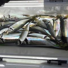 4月 27日(火) 午前、アジ釣り 午後・ウタセ真鯛の写真その8