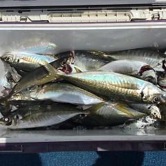 4月 27日(火) 午前、アジ釣り 午後・ウタセ真鯛の写真その9