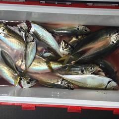 4月 28日(水)午前・アジ釣りの写真その2
