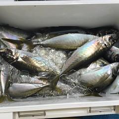 4月 28日(水)午前・アジ釣りの写真その3