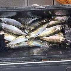 4月 28日(水)午前・アジ釣りの写真その4