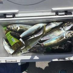 4月 30日(金) 午前便・アジ釣りの写真その1