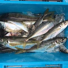 5月 16日(日)午前、アジ釣り 午後・ウタセ真鯛の写真その4