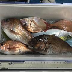 5月 16日(日)午前、アジ釣り 午後・ウタセ真鯛の写真その5