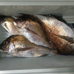 5月 16日(日)午前、アジ釣り 午後・ウタセ真鯛の写真その7