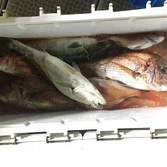 5月 16日(日)午前、アジ釣り 午後・ウタセ真鯛の写真その9