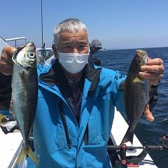 5月 23日(日)午前・アジ釣り 午後・ウタセ真鯛の写真その2