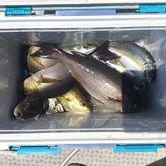 5月 23日(日)午前・アジ釣り 午後・ウタセ真鯛の写真その4