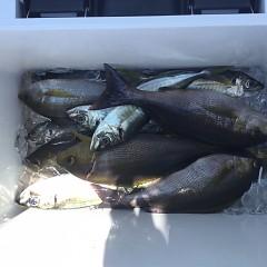 5月 23日(日)午前・アジ釣り 午後・ウタセ真鯛の写真その5