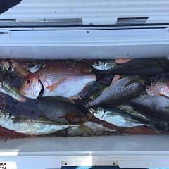 5月 23日(日)午前・アジ釣り 午後・ウタセ真鯛の写真その6
